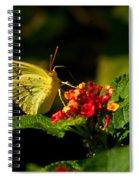 Sulpher Butterfly On Lantana Spiral Notebook