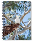 Sulphur-crested Cockatoo Spiral Notebook