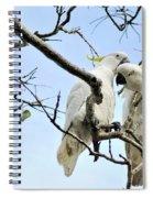 Sulphur Crested Cockatoos Spiral Notebook