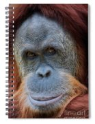 Sumatra Orangutan Portrait Spiral Notebook