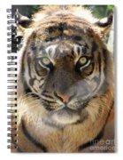 Sumatran Tiger-1440 Spiral Notebook