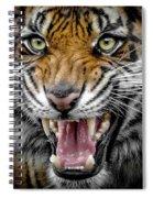 Sumatran Tiger Snarl Spiral Notebook