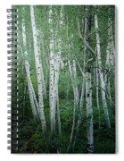 Summer Aspens  Spiral Notebook