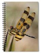 Summer Beauty Spiral Notebook
