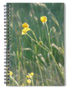Summer Buttercups Spiral Notebook