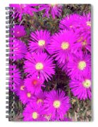 Summer Delight Spiral Notebook