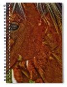 Summer Mare Spiral Notebook