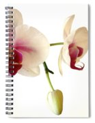 Summer Orchids Spiral Notebook