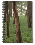 Summer Palace Trees And Lamp Spiral Notebook