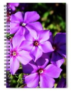 Summer Purple Phlox Spiral Notebook