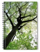 Summer Tree Spiral Notebook