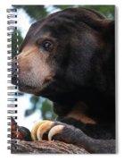 Sun Bear-7859 Spiral Notebook