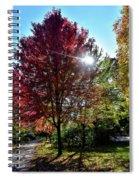 Sun Burst In Autumn Spiral Notebook