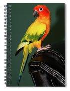 Sun Conure Spiral Notebook