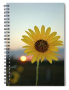 Sun Flower At Sunset Spiral Notebook