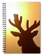 Sun Glaring Over A Bull Elk Spiral Notebook