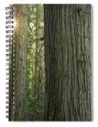 Sun In The Cedars Spiral Notebook