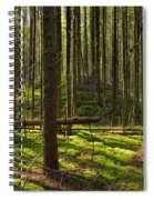 Sun Rays In Forest Spiral Notebook