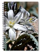 Sun Soaked Desert Lily Spiral Notebook