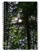 Sun Through Trees In Forest Spiral Notebook