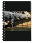 Sunbathing Gator Spiral Notebook