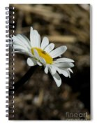 Sunbathing On A Daisy Spiral Notebook