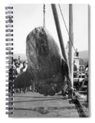 Sunfish Mola Mola On Monterey's Wharf Two June 20 1946 Spiral Notebook