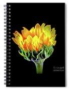 Sunflower 18-15 Spiral Notebook