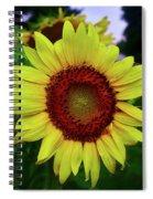 Sunflower After A Summer Rain Spiral Notebook