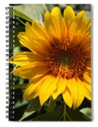 Sunflower Art- Summer Sun- Sunflowers Spiral Notebook