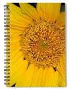 Sunflower At Dusk Spiral Notebook