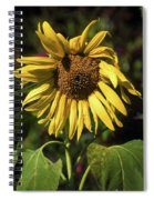 Sunflower Close Up Spiral Notebook