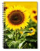 Sunflower Crops On A Farm In South Dakota Spiral Notebook