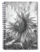 Sunflower Dawn Black And White Drawing Spiral Notebook
