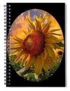 Sunflower Dawn In Oval Spiral Notebook