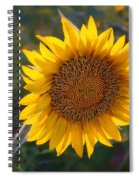 Sunflower - Facing East Spiral Notebook