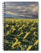 Sunflower Fields Near Denver International Airport Spiral Notebook