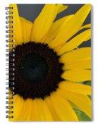 Sunflower II Spiral Notebook