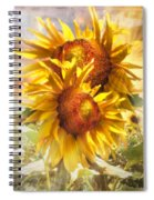 Sunflower Light Spiral Notebook