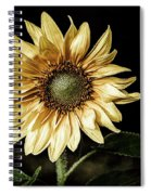 Sunflower Modified Spiral Notebook