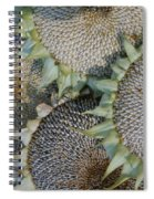 Sunflower Seed Heads Dried To Perfection Spiral Notebook