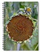 Sunflower Seedhead Spiral Notebook