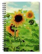 Sunflower Trio Spiral Notebook