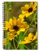 Sunflowers Along The Trail Spiral Notebook
