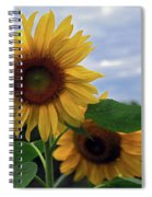 Sunflowers Close Up Spiral Notebook