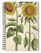 Sunflowers Illustration From Florilegium Spiral Notebook