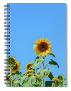 Sunflowers On Blue Spiral Notebook