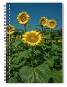 Sunflowers Weldon Spring Mo Ver1_dsc9821_16 Spiral Notebook