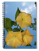 Sunglow Angel Trumpet Spiral Notebook