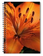 Sunkissed Lily Spiral Notebook